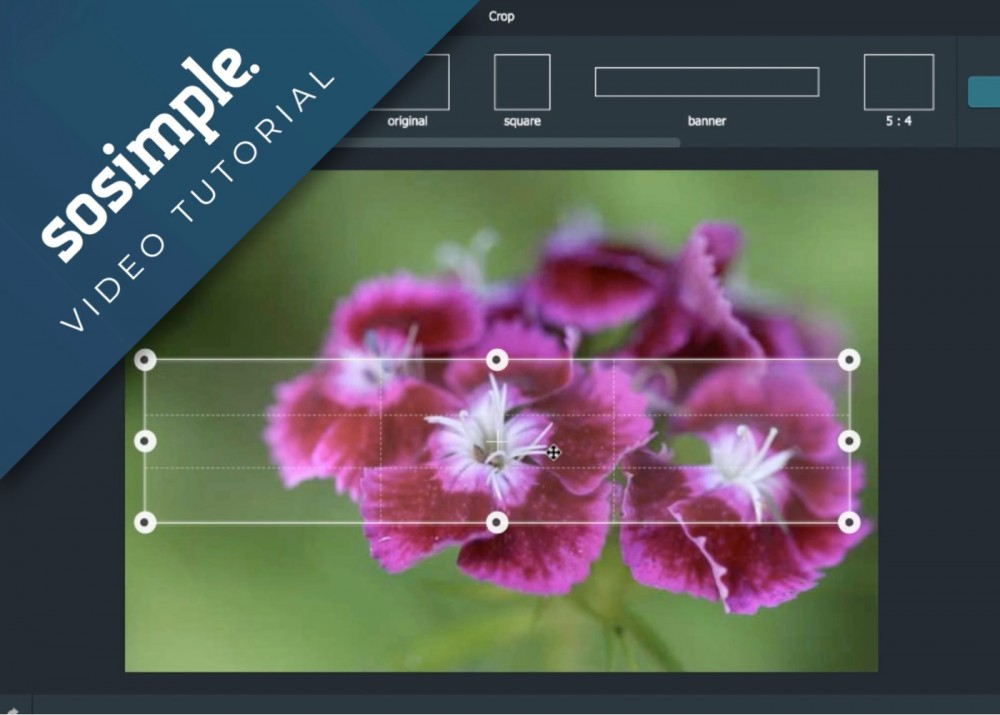 SoSimple Announces New Photo Editor Tool (Video)